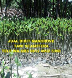 jual-bibit-mangrove